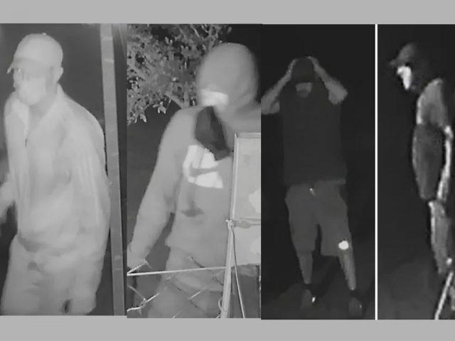 CCTV Wilden dog theft