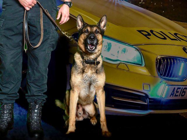 Bedfordshire Police Dog Oz
