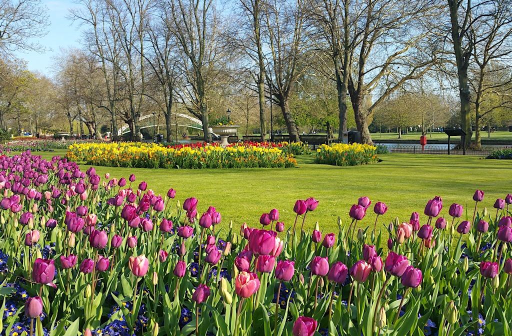 Embankment spring planting