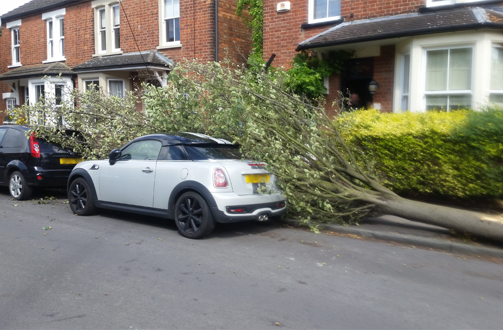 Fallen Tree Pembroke Avenue 2019