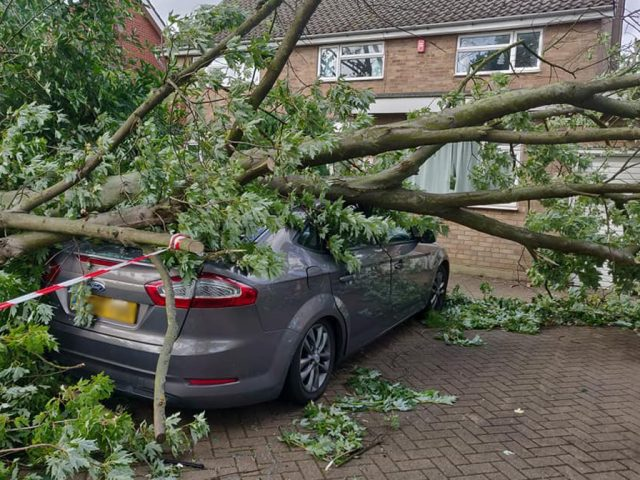 Fallen Tree Polhill Avenue 2019 1