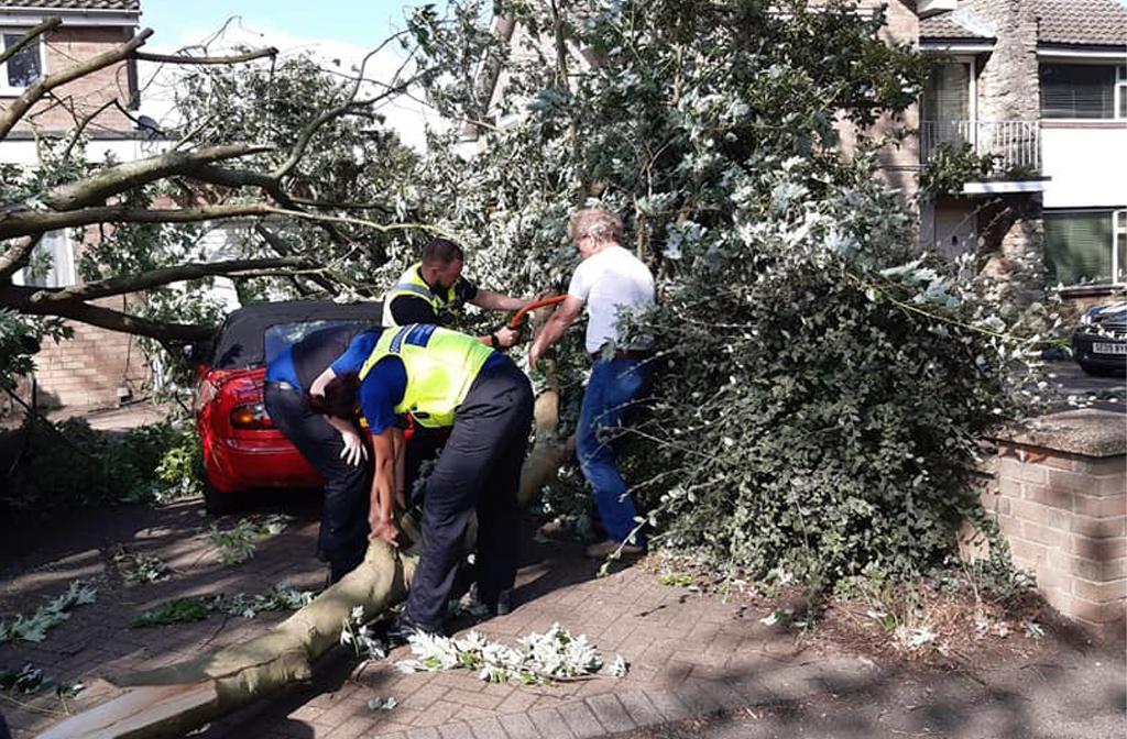 Fallen Tree Polhill Avenue 2019 2