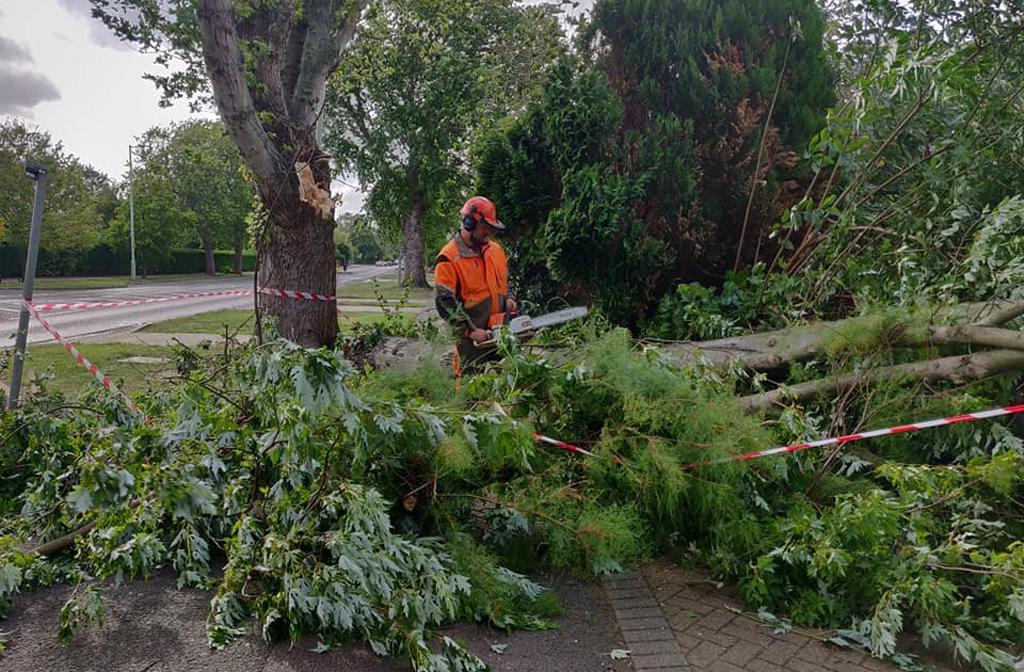 Fallen Tree Polhill Avenue 2019 3