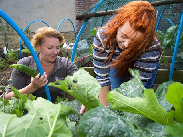 RHS gardening