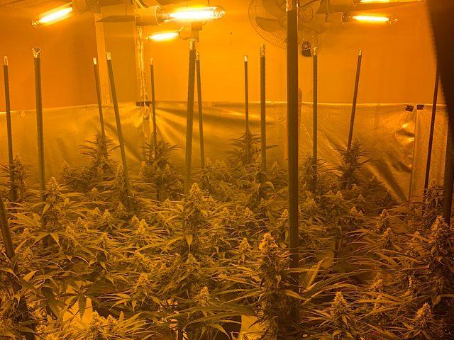 Sharnbrook cannabis factory